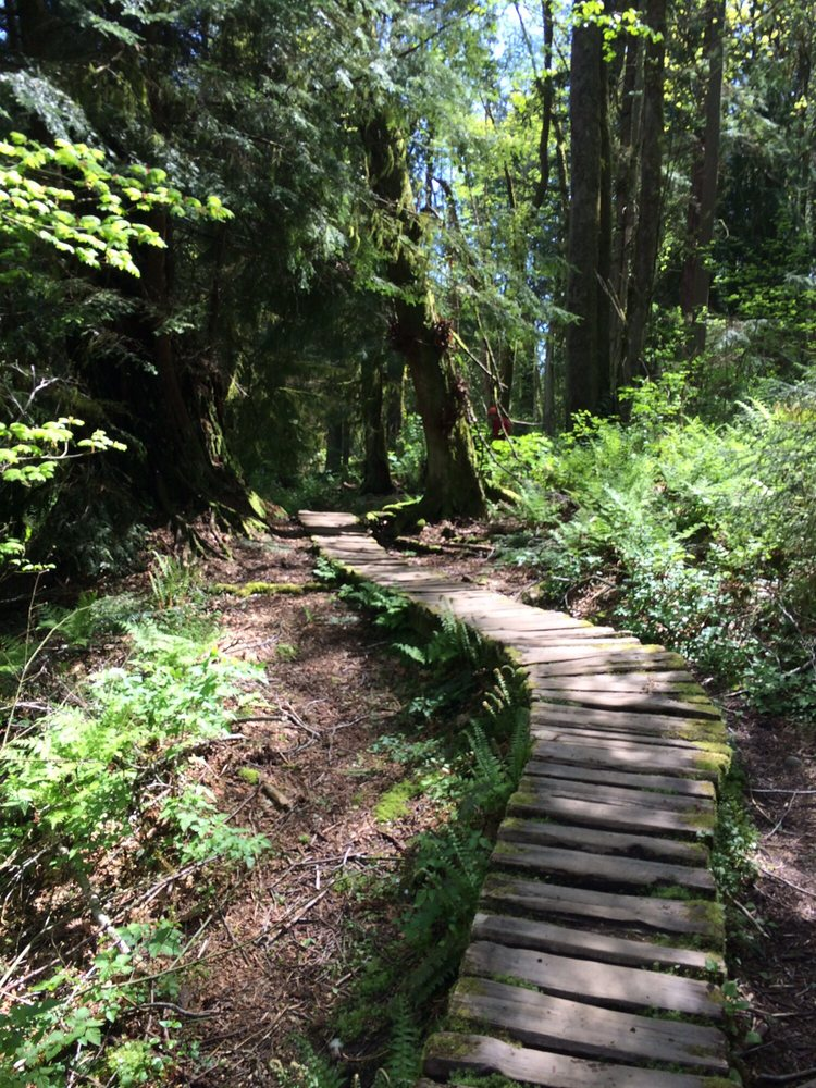 Burnaby Mountain Trail