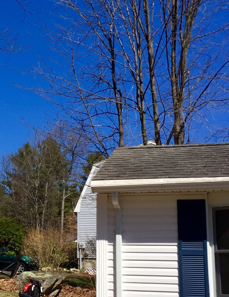 Tree Line Property Services: Derry, NH
