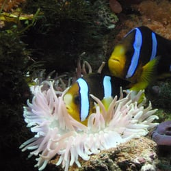 Marvelous Photo Of Living Art Aquariums   East Quogue, NY, United States. A Pair