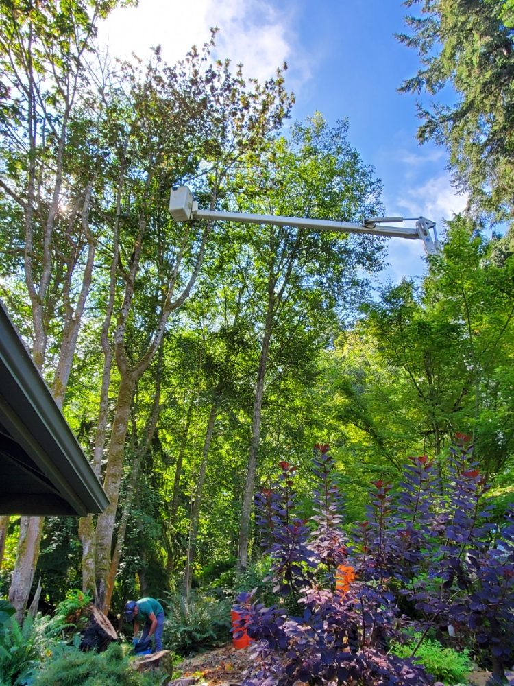 Kenny Tree: 8501 168th St SE, Snohomish, WA