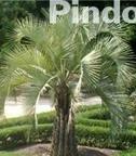Four Seasons Nursery: 961 S Military Hwy, Virginia Beach, VA