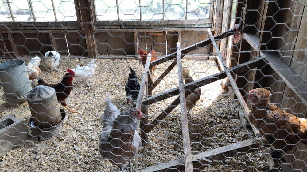 Weston Red Barn Farm: 16300 Wilkerson Rd, Weston, MO