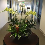 Merveilleux ( Photo Of American Interior Plant Service   San Carlos, CA, United States.  Large