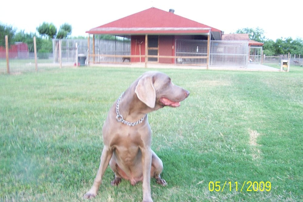 Smith Ranch Kennels: 36844 San Jose Ranch Rd, Los Fresnos, TX