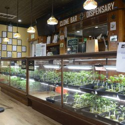 Cannabis Hermp Store - 41 Photos - Cannabis Dispensaries