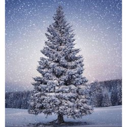 Cook's Farm Christmas Trees - Christmas Trees - Markfield Lane ...