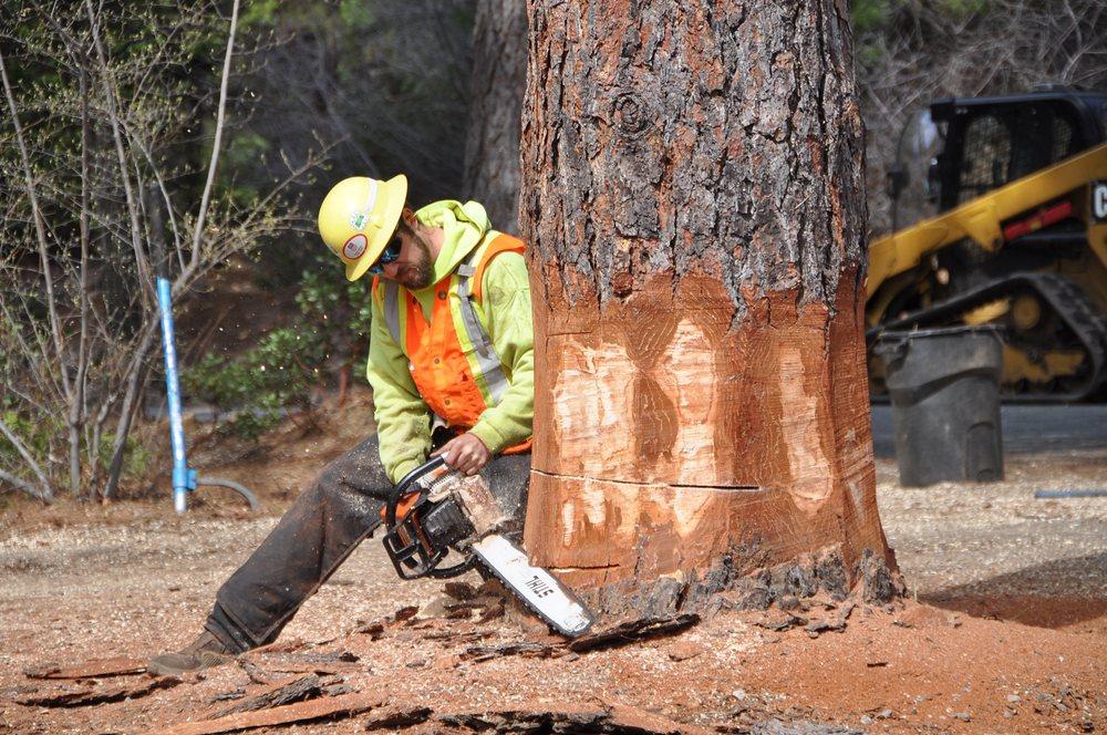A Cut Above Tree Service: 209 N Mt Shasta Blvd, Mount Shasta, CA