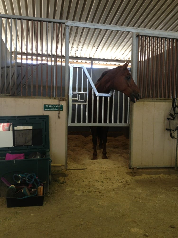 My Horse In His Stall Inside The Barn Yelp