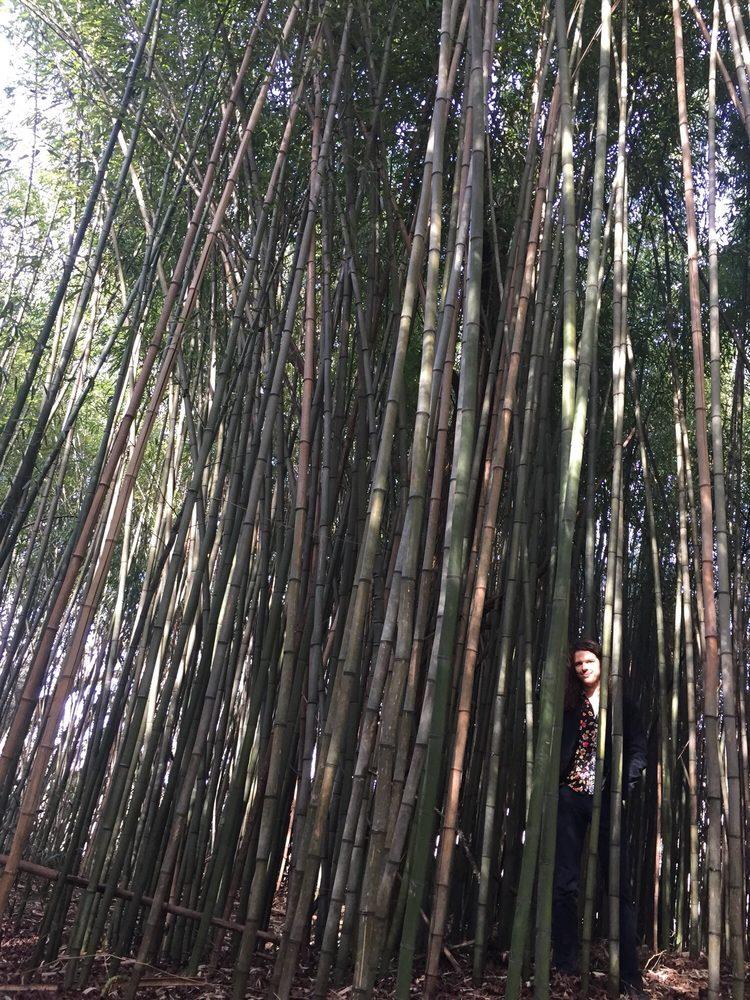 Garden Walk Chattanooga: Bamboo Forest