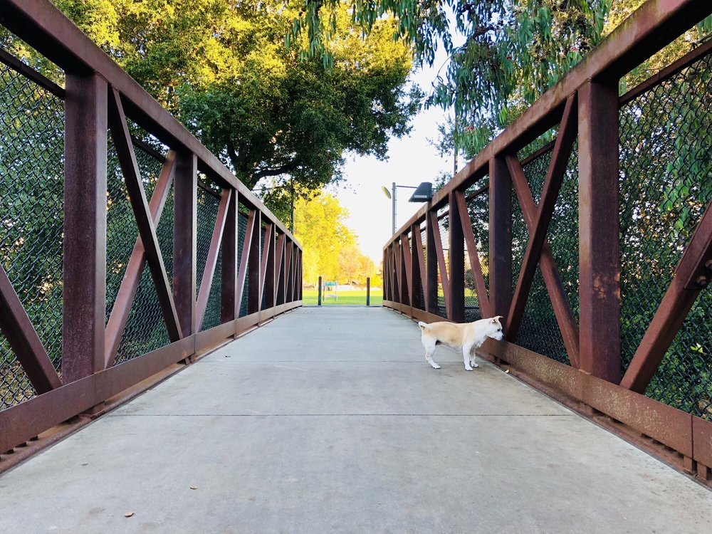 Creekside Park: 10445 Miller Ave, Cupertino, CA