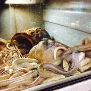 exotic pets 76 photos \u0026 108 reviews pet stores 2410 n decaturthis guy was photo of exotic pets las vegas, nv, united states