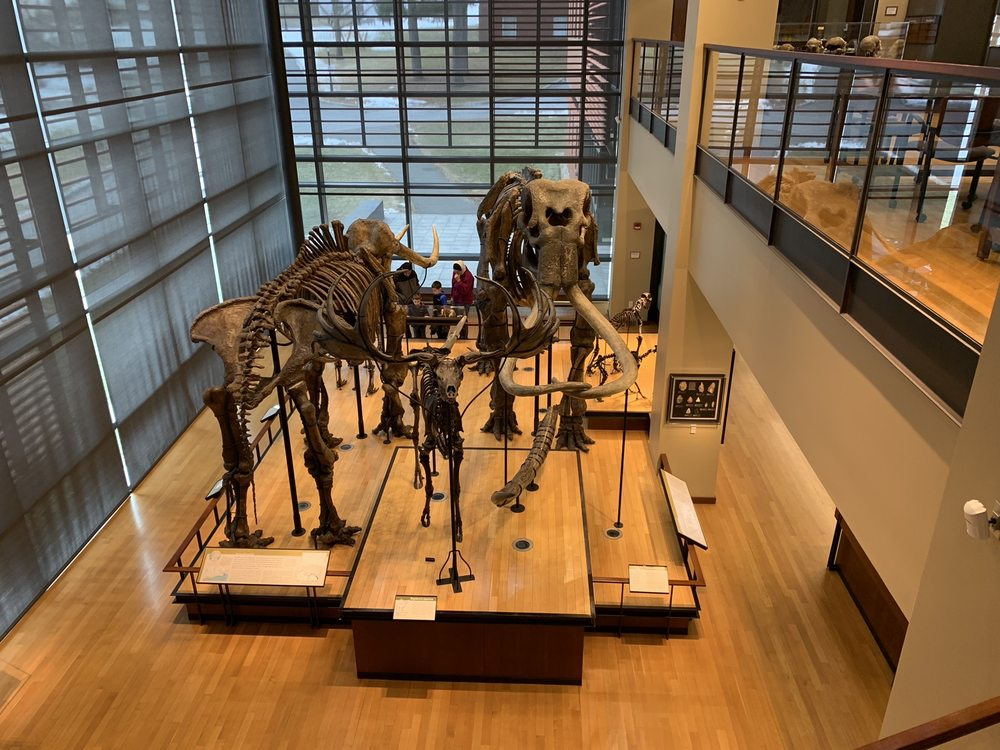 Social Spots from Beneski Museum of Natural History