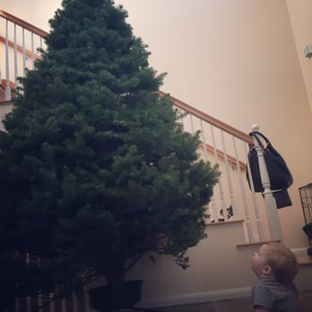 Photo of Mr Jingles Christmas Trees - San Diego, CA, United States. Big - Mr Jingles Christmas Trees - CLOSED - Christmas Trees - 2604 5th Ave