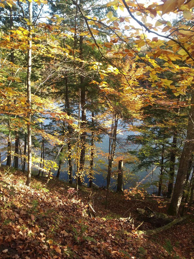 Manistee River Trail: Manistee River Trail, Mesick, MI