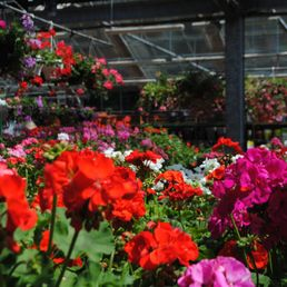Photos pour au jardin fleuri yelp for Jardin fleuri lyon 9