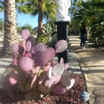 cactus garden   photos  local flavor  mulholland drive  n, Beautiful flower
