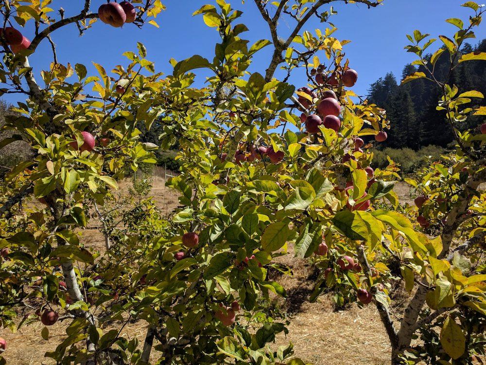 Swanton Pacific Ranch-Cal Poly: 480 Swanton Rd, Davenport, CA