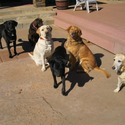 Fire Dog Home and Dog Sitting - Pet Boarding/Pet Sitting ...