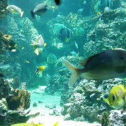 aquarium mare nostrum 45 photos 48 avis aquarium all 233 e ulysse montpellier num 233 ro de