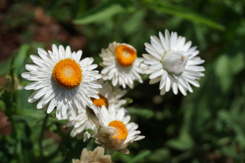 Social Spots from Birmingham Botanical Gardens