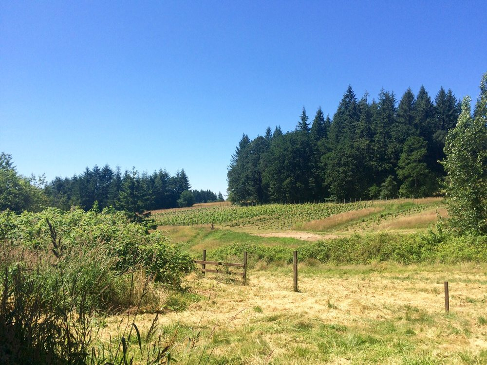 Rezabek Vineyards: 11700 NE 279th St, Battle Ground, WA