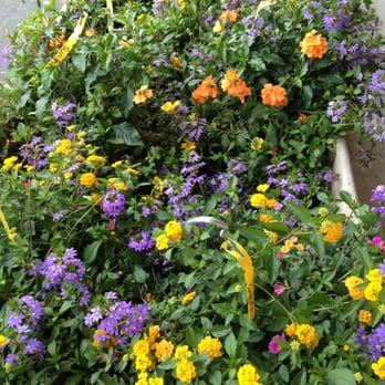 Photo Of Plants For All Seasons Spring Tx United States Sun Mix