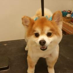 Las Vegas Zen Dog - 114 Photos & 79 Reviews - Pet Groomers - 4840
