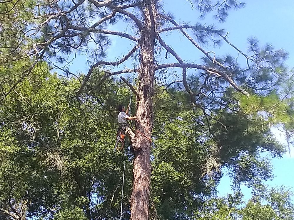 Lonnie and Jimmy's tree removal: Bristol, FL