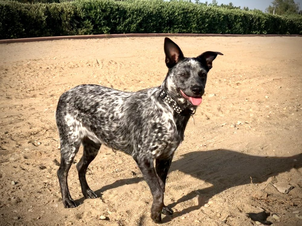Thompson Veterinary Services: 5102 E Highway 199, Springtown, TX