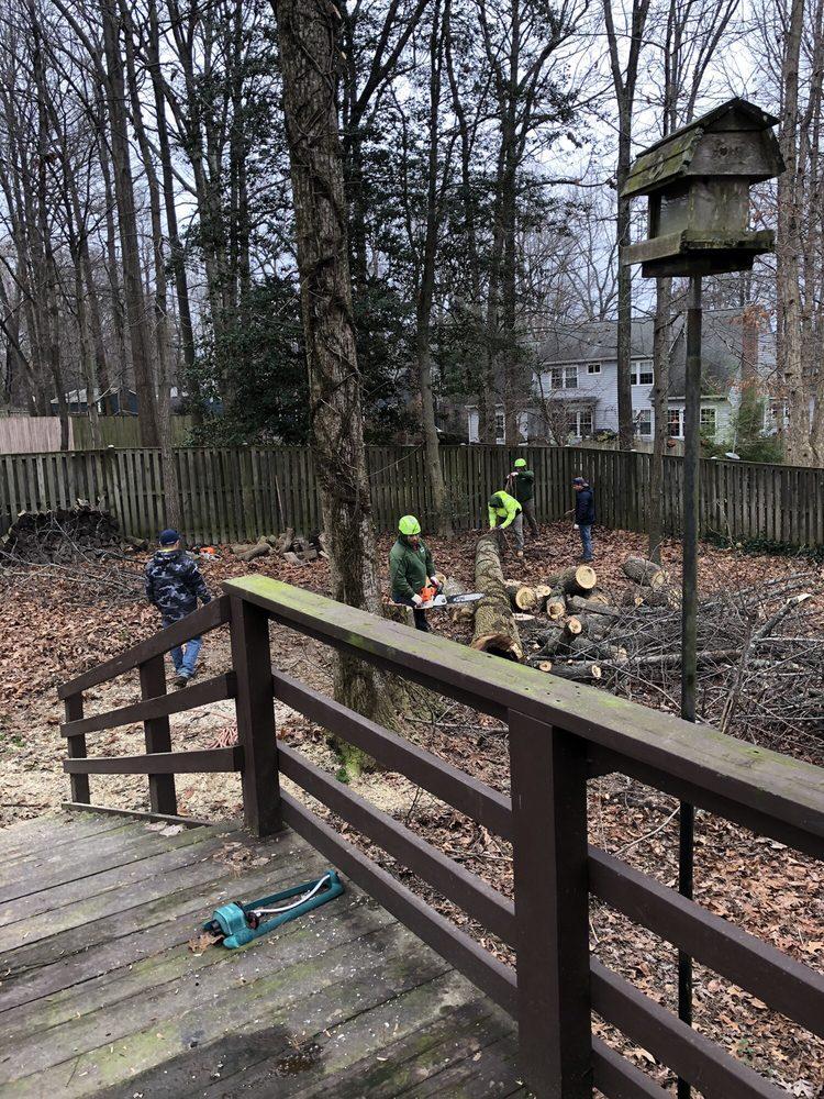 Top Notch Tree Services: 6301 Harrison Rd, Fredericksburg, VA