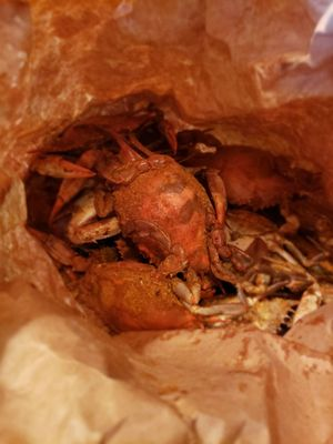 7c542b9be Ocean Blue Seafood Restaurant - 36 Photos   16 Reviews - Seafood ...