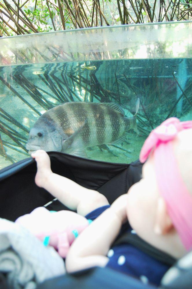 The Florida Aquarium: 701 Channelside Dr, Tampa, FL