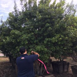 Photo Of Tex Tree Nurseries Spring Tx United States Luis Tagging