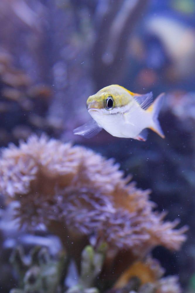 Anchor Aquarium Service Inc.: 28 Locust St, Brooklyn, NY