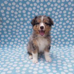 Dan's Kennels - 45 Photos & 19 Reviews - Pet Breeders