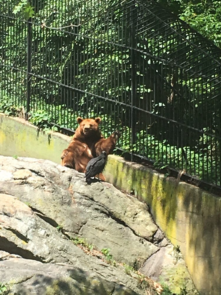 Trailside Museums & Zoo: Bear Mountain State Park, Bear Mountain, NY