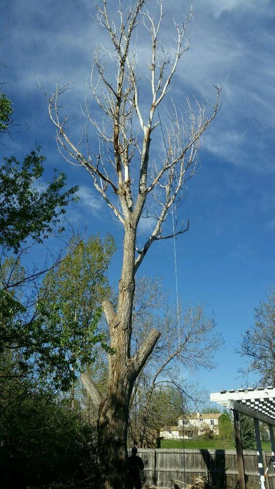 R&M Tree Service: Bennett, CO