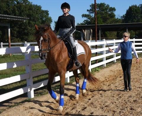 Susan Stedman Equestrian Training