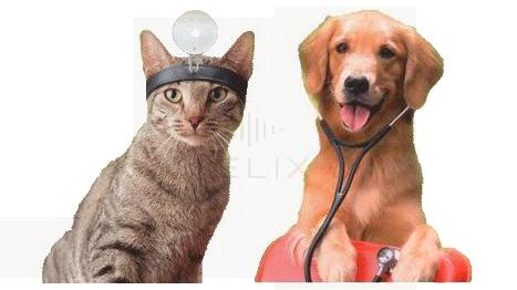 Greenbrier Veterinary Hospital: 275 Plane View Dr, Lewisburg, WV