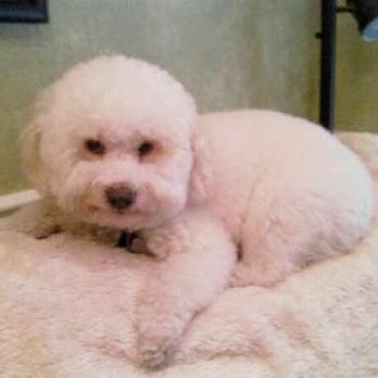 Dog Grooming In Glendora Ca