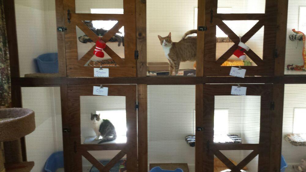 Miss Kitty's Inn: 7358 June Bug Ln, Vacaville, CA