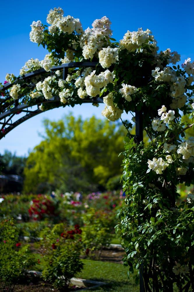Photos For Mckinley Park Rose Garden Yelp