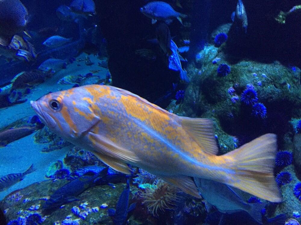 Cool looking fish - Yelp