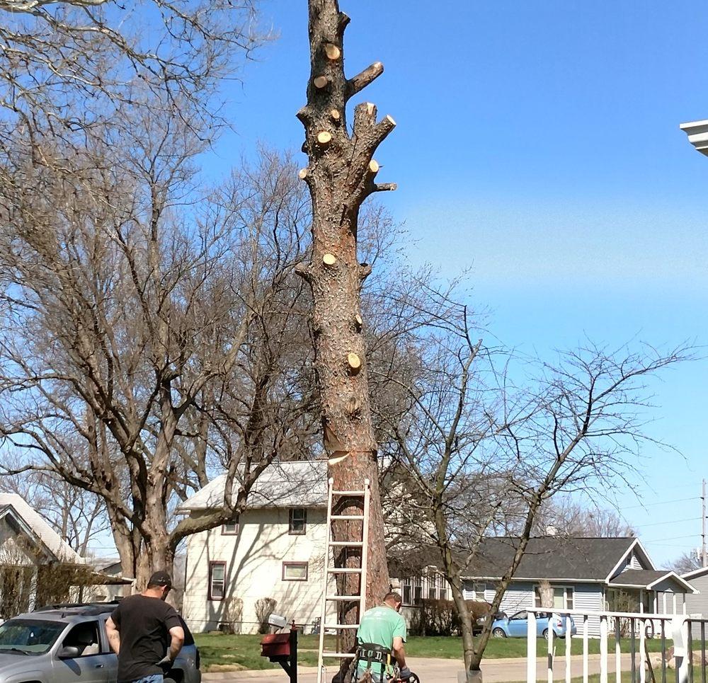 Dillon Tree Service: Omaha, NE