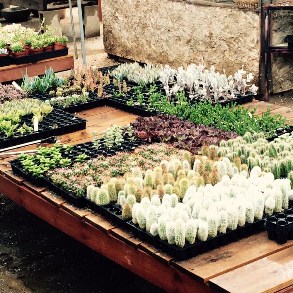 Photos For Moorten Botanical Garden Yelp