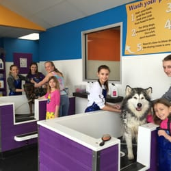 Community bark dog wash groom 26 photos 45 reviews pet photo of community bark dog wash groom milwaukee wi united states solutioingenieria Image collections