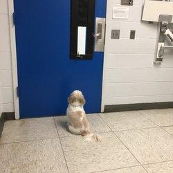 Veterinary Hospital University of Pennsylvania - 17 Photos & 127