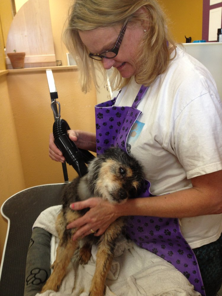 Cheap Dog Groomers In Long Beach Ca