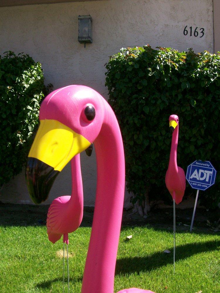 Flock o' Flamingos - Party Supplies - 777 N Palm Canyon ...