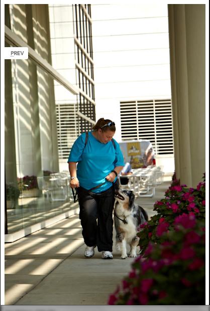 Elite Dog Training Winston Salem